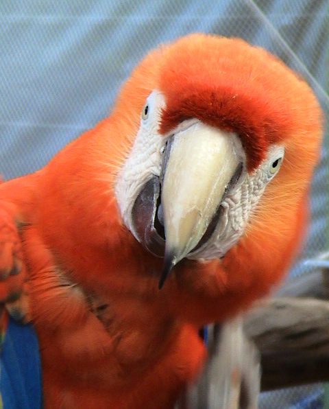 Truly bad teeth and the 10 Crazy Parrots Contest