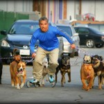 Cesar Rollerblading with Dogs